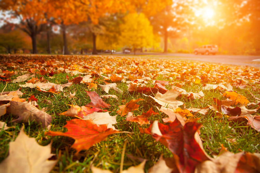 Rasen kalken im Herbst