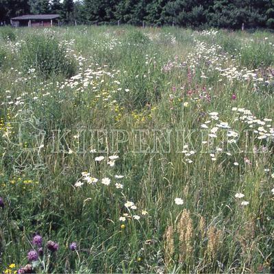Kiepenkerl RSM 8.1.3 Biotopmischung 1kg Samen