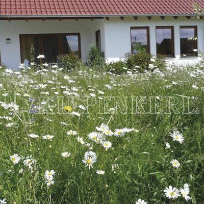 Rieger-Hofmann Blumenrasen-Kräuterrasen