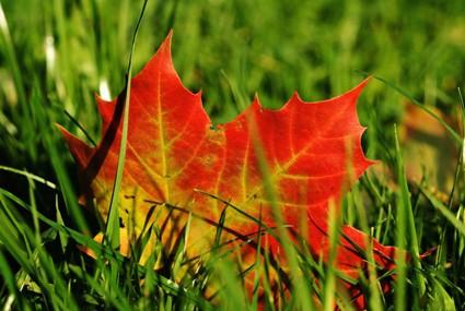 3-Tipps-mit-denen-Sie-im-Herbst-Ihre-Rasenflaechen-2