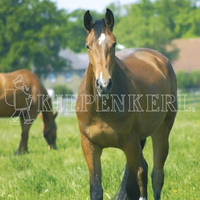 Country Horse 2120 Pferdeweide Balance fruktanarm