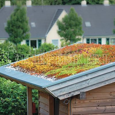 Kiepenkerl RSM 6.1 Extensive Dachbegrünung 1 kg Samen