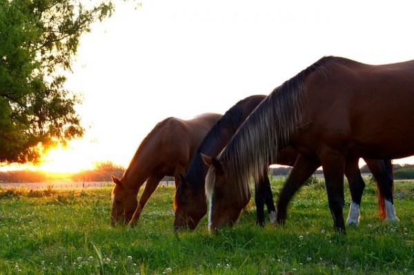 grassamen-pferdeweide