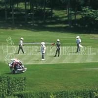 Kiepenkerl DSV RSM 4.4.1 Golfrasen Spielbahn