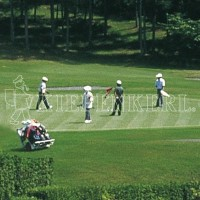 Kiepenkerl DSV RSM 4.4.1 Golfrasen Spielbahn 10kg Rasensamen