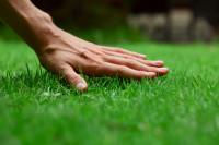 Was ist bei der Rasenpflege im März zu beachten?