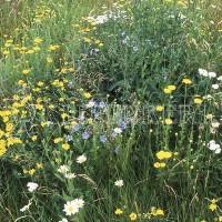 Kiepenkerl RSM 8.1.4 Biotopmischung 1kg Samen