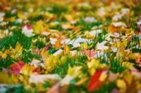3 Tipps, mit denen Sie den Rasen im Herbst verwöhnen sollten