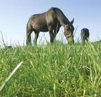 Country Horse 2122 Pferdeweide Kräutermenü
