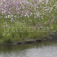 Rieger-Hofmann Ufermischung 1 Kilogramm Samen