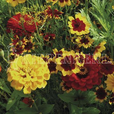 Kiepenkerl Warme Blütentöne