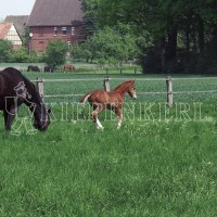 Country Horse 2117 Pferdeweide