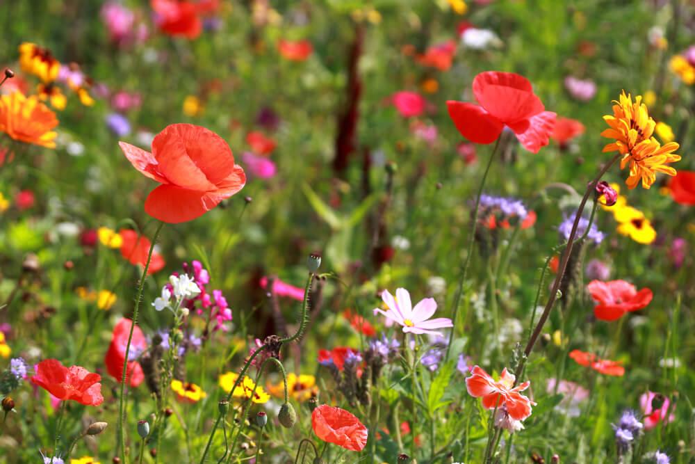 Wildblumen — Stockfoto