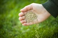 Rasen säen im Herbst: Welcher Dünger ist jetzt richtig?