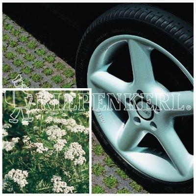 Kiepenkerl DSV RSM 5.1.1 Parkplatzrasen mit 2 Prozent Achillea