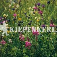 Kiepenkerl Blumenwiesen-Mischung LÖBF Kleve-Kellen