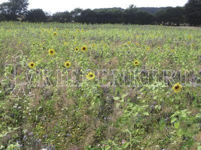 Kiepenkerl Wildschutzmischung WSM 4® 10 Kg